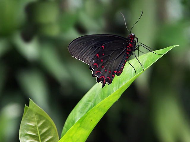 http://www.wideangle.ca/images/butterfly3.jpg