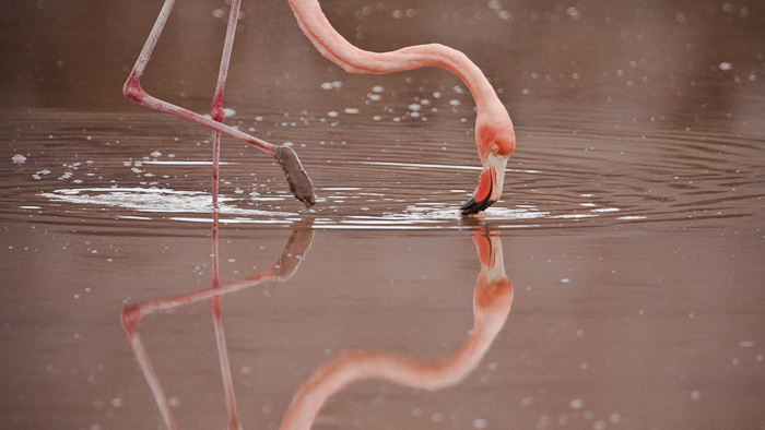 http://www.wideangle.ca/images/flamingo.jpg