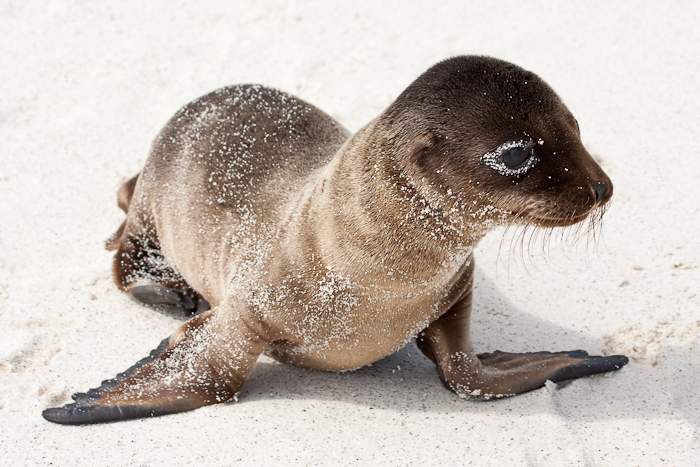 http://www.wideangle.ca/images/sealionbaby.jpg